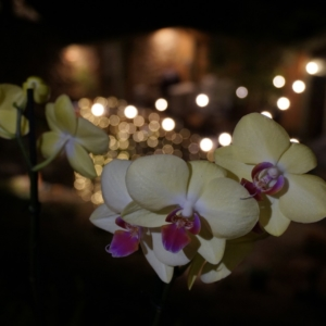 Flowers at The Petite Wedding Venue - Birmingham, AL